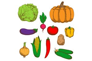 Farm vegetables color retro sketches