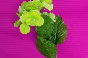 Green Flower Minimalism