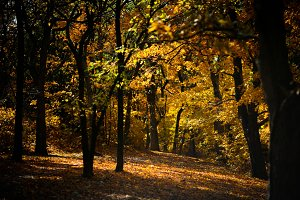 Golden Autumn Light