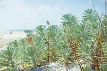 succulent on the beach. Soft beach background of sunny day on the beach.