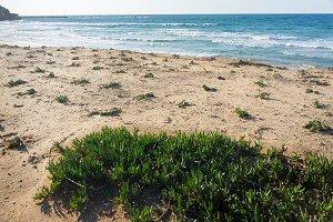 Beach panorama full of coastal flora. Grassy sea shore.