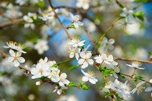 Beautiful blooming spring time