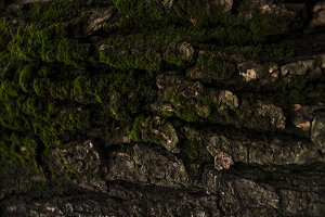 Texture of tree bark and moss.