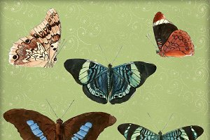 Vintage Watercolor Butterfly Clipart