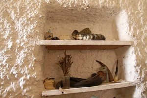 shelf paleontologist