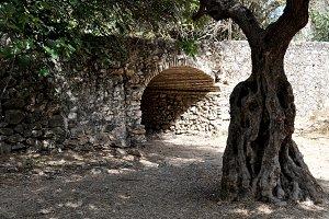 ruins and tree