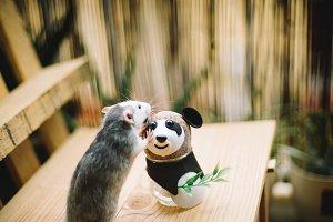 cute rat dumbo