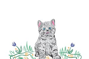 kitten cat in sketch style