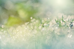dew drops on green grass