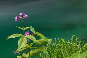 Flower and the river