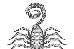 Vector scorpion zentangle icon