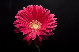 beautiful flower whit
