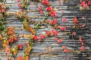 Wall and leafes
