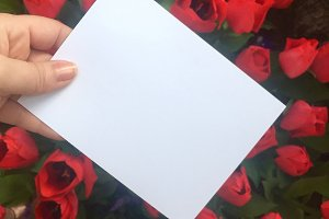 Notecard with tulips