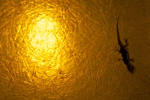 Lizard into Lantern
