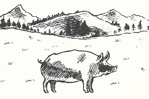 Illustration of a pig on a meadow