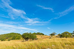 Natural savannah landscape