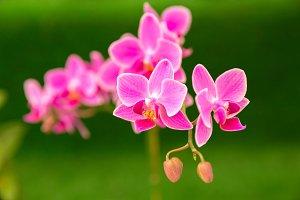 Orchids flower