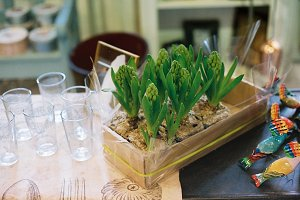 Hyacinths in cosy interior