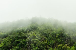 Tropical forest with morning fog