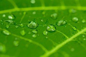 Rain dew drop on leaf