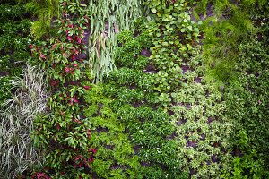 Nature green tree wall
