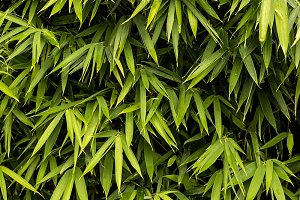 Green Bamboo texture.