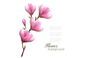 Nature Background With Magnolia.