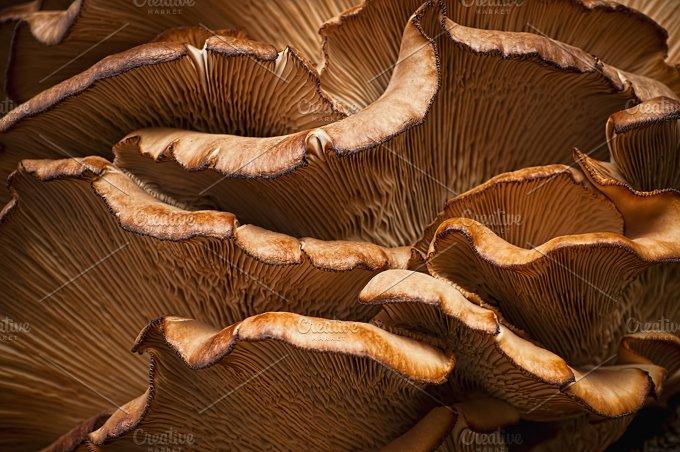 Mashroom Waves - Nature