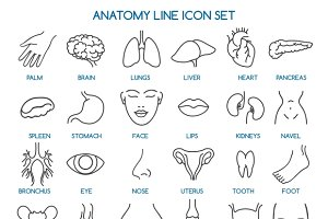 Anatomy line icons