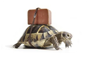 Turtle with suitcase on a back.