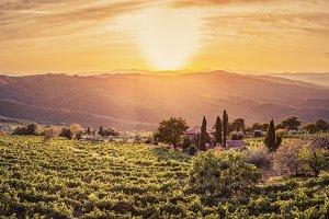 Vineyard landscape, Tuscany, Italy.
