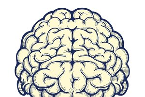 Human brain hand drawn icon