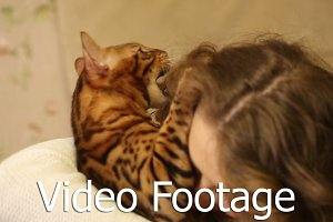 Bengal cat biting his mistress
