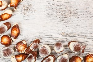 Chocolate seashell candies