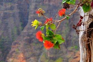 'Ohi'a Lehua, Waimea Canyon