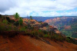 Waimea Canyon View with Iliau