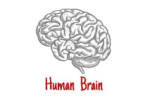 Engraving sketch of human brain