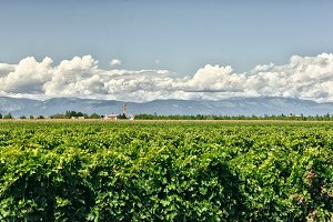 grade fields with beautiful mountains and clouds on background, Italy.