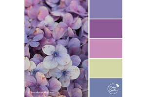 Purple Petals Color Palette