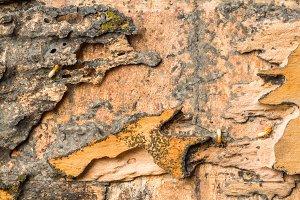 Wood box eaten by termites