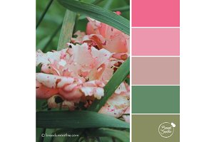 Rose Blush Color Palette