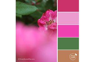 Fuschia Roses Color Palette
