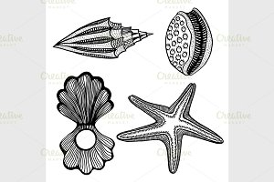 Shells and star