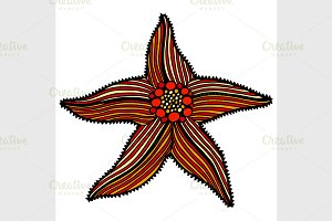 sketch illustration of starfish