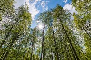 Look up in the green spring forest