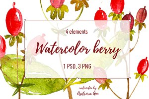 Watercolor berry
