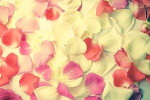 rose petals in vintage color