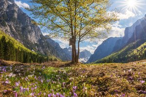Krma valley blooming in spring
