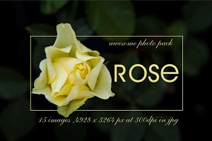 15 high quality photos of rose